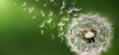 Photo of the Day: Dandelion clock in morning, Bess Hamiti
