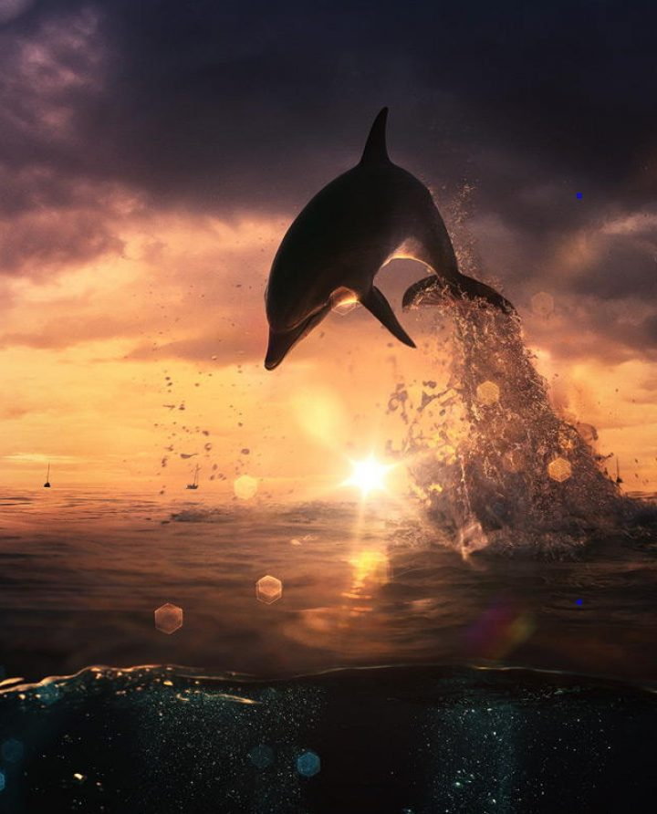 Photo of the Day: Dolphin, by Vitaliy Sokol